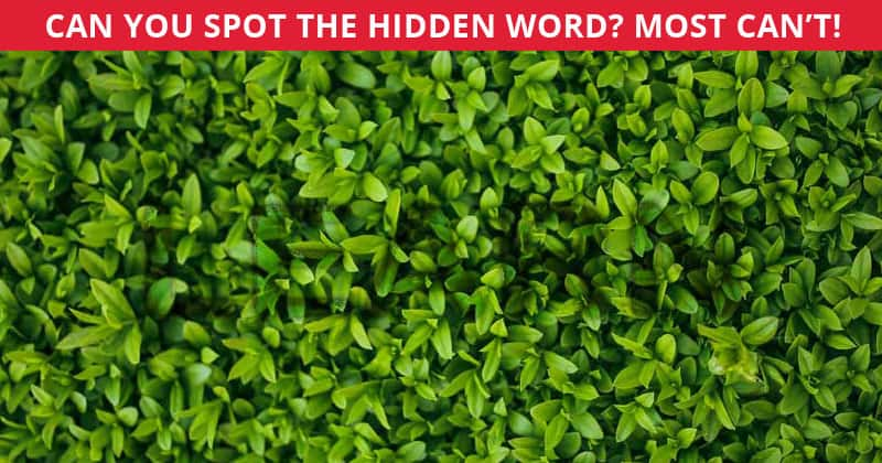 No One Can Score A Perfect 10 On This Tough Hidden Word Challenge Without Cheating. Prove Us Wrong!