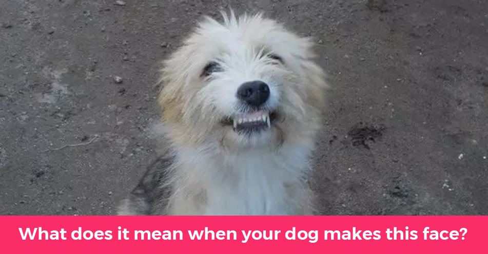 How Well Do You Understand Dog Body Language?