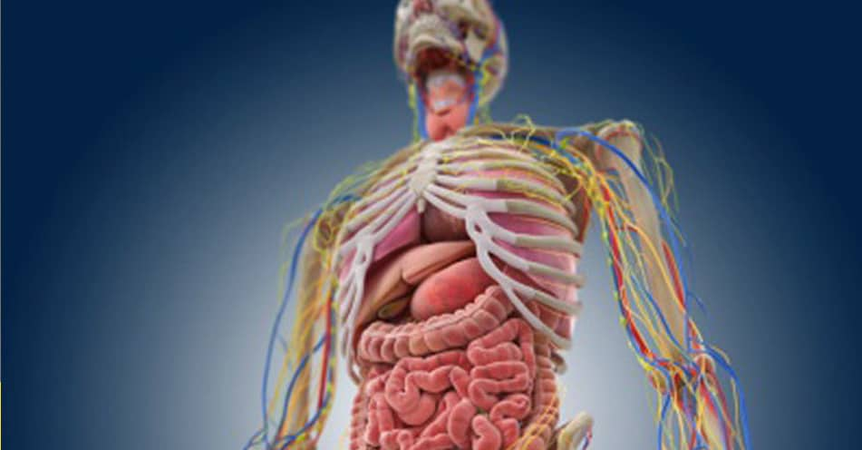 No One Can Score A Perfect 10 On This Impossible Human Anatomy Quiz