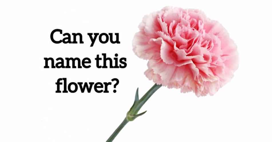 Only 3% Of Women Can Name The 20 Most Common Flowers Just By Looking At Them