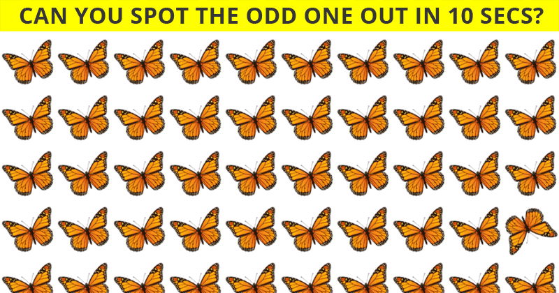 Almost No One Can Achieve 100% In This Odd One Out Visual Puzzle. Prove Us Wrong!