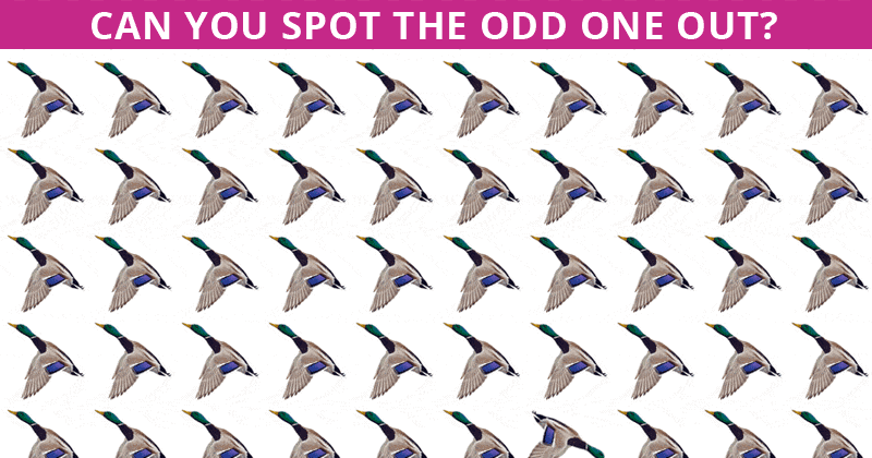 We Gave This Odd One Out Visual Puzzle To 100 High School Students And No One Got All Correct. Can You Beat Them?