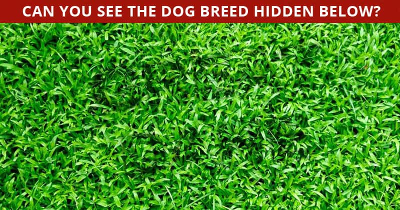 Almost No One Can Beat This Difficult Hidden Dog Breeds Visual Game. How About You?