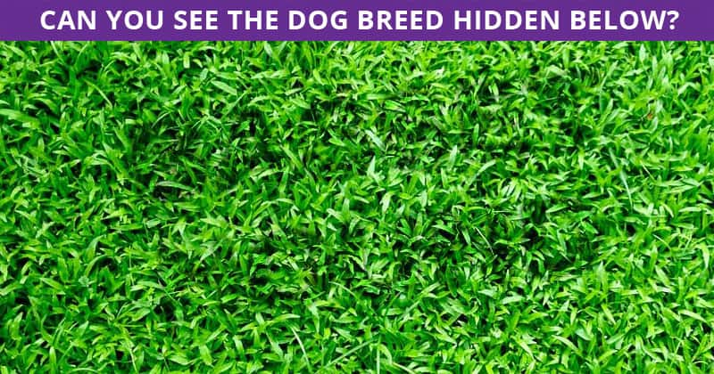 People Are Saying This Hidden Dog Breeds Puzzle Is Impossible. Prove Us Wrong!