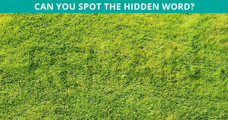 Only 1 In 30 Sharp-Eyed People Can Achieve 100% In This Difficult Disguised Word Test. How About You?