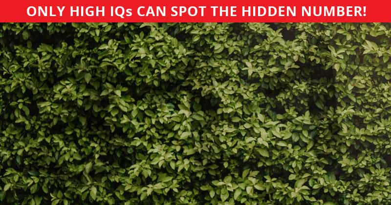 This Hidden Number Quiz Will Determine Your Visual Perception In Less Than One Minute
