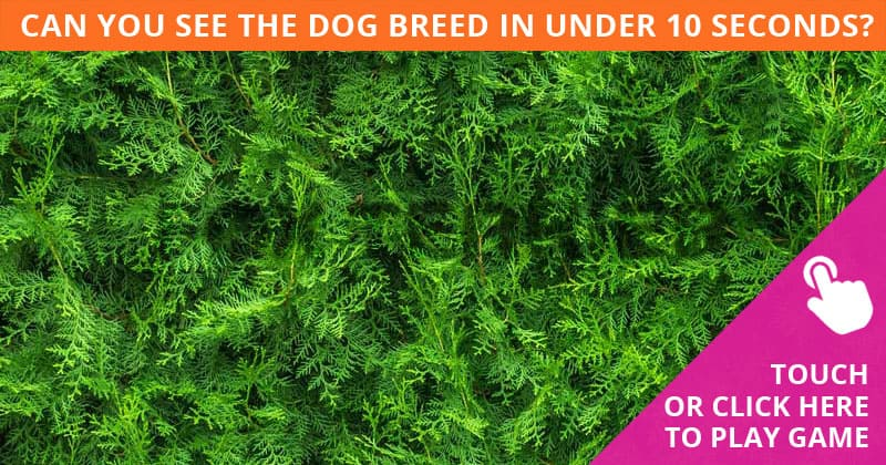 Almost No One Can Ace This Challenging Hidden Dog Breeds Visual Challenge