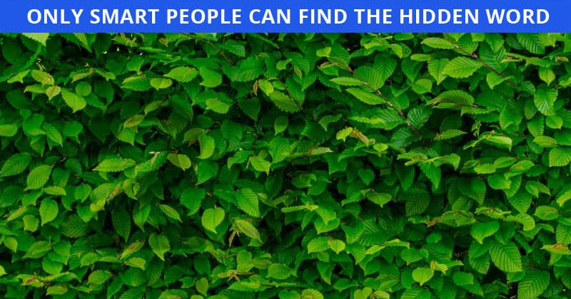 Only 1 In 30 People Can Achieve 100% In This Difficult Hidden Number Visual Game. How About You?