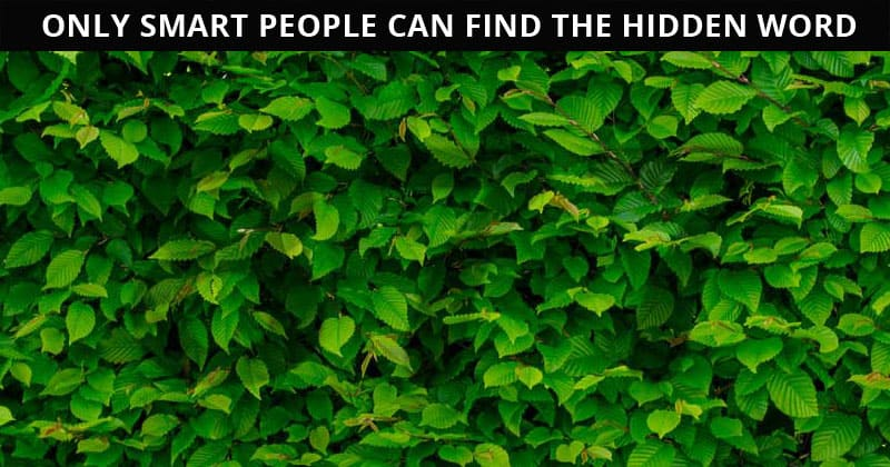 This Hidden Number Visual Game Will Determine Your Visual Perception In Less Than 60 Seconds