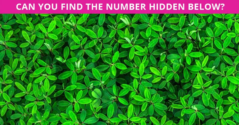 This Hidden Number Test Will Determine Your Visual Perception Talents In One Minute
